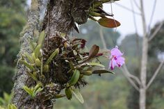 Our Life in Medellin Colombia: Orquídeas (Orchids)