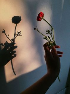 Ideas photography inspiration ideas pictures for 2019 Hand Photography, Shadow Photography, Amazing Photography, Photography Aesthetic, Photography Flowers, Photography Props, Photography Tutorials, Fashion Photography, Pinterest Photography