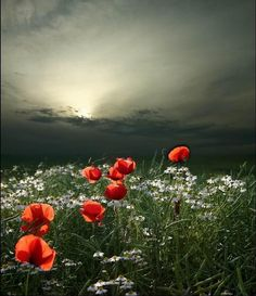 Gorgeous Gray sky with roses in the foreground. Great shot by Veronika Pinke Photography