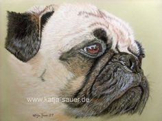 Hundezeichnungen und Hundeportraits in Pastellkreide - Mops - Tierzeichnungen und Tierportraits von Katja Sauer / Dog paintings and dog portraits in soft pastels - Animal painting and animal portraits by Katja Sauer