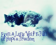 wolf pictures with sayings | Lone Wolf Quotes Tumblr