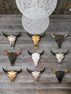 Bison Skull from Objects of Curiosity on Gilt