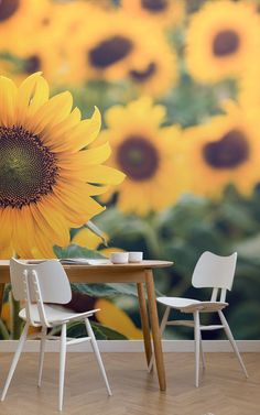 Create a bespoke feature wall in your home with this show stopping sunflower sunrise wallpaper, a photographic mural. Sunrise Wallpaper, Van Gogh Art, Sunflower Wallpaper, Sunflower Design, Inspirational Wallpapers, Sunflower Fields, Floral Wall, Bird Prints, Mobile Wallpaper