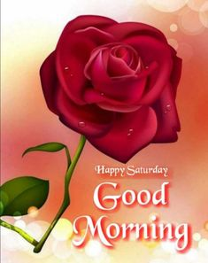 Saturday Morning, Happy Saturday, Good Morning Wishes, Morning Quotes, Rose, Flowers, Plants, Pink, Plant