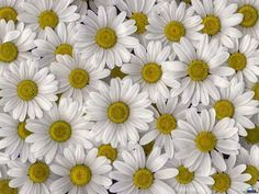 Vida Suculenta: Plantas que atraem as boas energias
