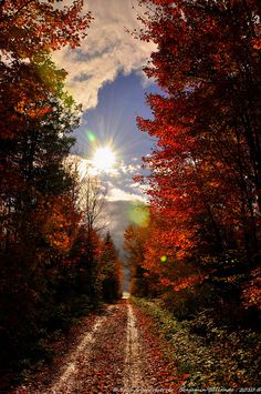 Autumn path fall