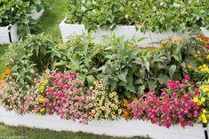 Flori ce atrag polenizatorii în grădină - gardenbio.ro Home And Garden, Organic, Cottages, Plants, House, Cabins, Country Homes, Home, Cottage