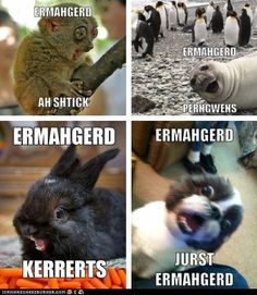Cornwall Map, Funny, Animals, Animales, Animaux, Funny Parenting, Animal, Animais, Hilarious