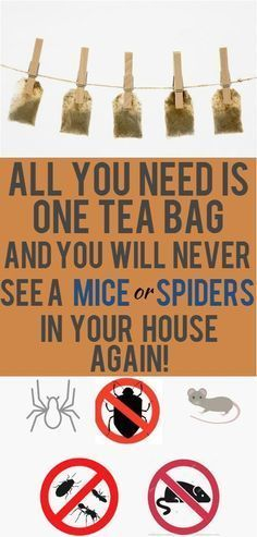 One Tea Bag And You Will Never See A Mice Or Spiders In Your House Again! (Works great) - PowerfulRemedy Mice and spider infestations are problems that are bothering thousands of households around the globe. A huge number of homeowners House Cleaning Tips, Cleaning Hacks, Get Rid Of Spiders, Keep Spiders Away, Keep Mice Away, Getting Rid Of Mice, Used Tea Bags, Uses For Tea Bags, Peppermint Tea