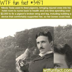 Nikola Tesla and pigeons - It seems Most of history's Greatest Minds were Animal Lovers!   ~WTF fun facts