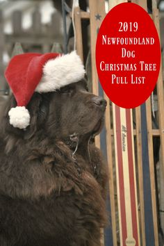A list of Christmas tree farms that will have Newfies on site to haul Christmas trees for the 2019 holiday season. Newfoundland Rescue, Greenbrier Farms, Dogs With Jobs, Bear Mountain, Christmas Tree Farm, Homemade Dog Food, Fun Events, Make A Donation, Working Dogs