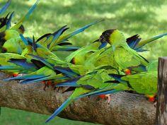 Pantanal  http://www.trilhaseaventuras.com.br/blog/wp-content/uploads/2011/04/Viagem-Bonito-e-Pantanal-264.jpg