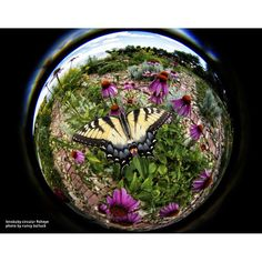 The whimsy of a butterfly. Happy Fisheye Friday - Photo by Nancy Balluck, taken with the Circular #Fisheye. #lensbaby
