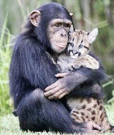 L'amour ne connait pas de frontière chez les animaux,
