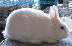 Florida White        Senior Weight: 4 - 6 poundsFlorida White Rabbit Breed      Type: Compact.      Color: Pure white. Eyes are pink.      Distinctive: Smaller size of a commercial appearance.
