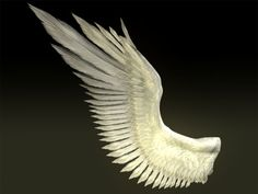 Angel Birds   maya wings bird angel - Bird Angel Wing... by Fernando Rabello