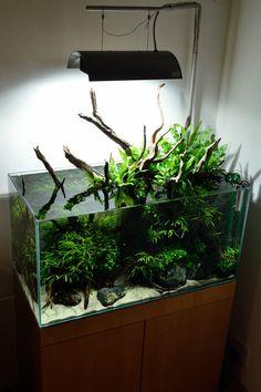 Aquarium Garden, Nano Aquarium, Nature Aquarium, Aquarium Design, Planted Aquarium, Aquarium Fish, Cool Tanks, Awesome Tanks, Aquarium Driftwood