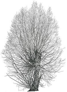 Деревья Annie Ovenden (1945) Англия