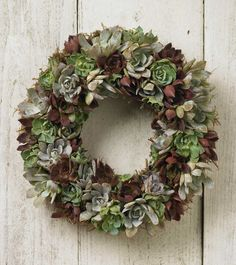 Echeveria wreath from Viva Terra.  Maybe someday I'll get around to making one.