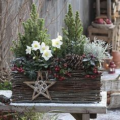 26 Christmas Garden And Patio Decoration Ideas Christmas Planters, Christmas Arrangements, Outdoor Christmas Decorations, Christmas Centerpieces, Holiday Decor, Country Christmas, Winter Christmas, Christmas Crafts, Magical Christmas