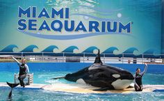 Should dolphins and orcas be kept in captivity?