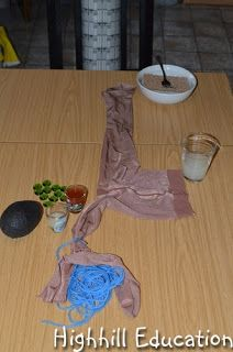 Human Body - Week 9 - Digestive System Activity