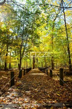 view of autumn trees and walkway. - Image of autumn trees and walkway.