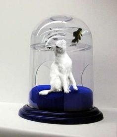 'Muuto Nouveau Pet' Cat Dome Includes Overhead Fish Tank - using live fish to be terrorized for cat's amusement. Sick.