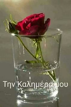 Shot Glass, Glass Vase, Beautiful Pink Roses, Good Morning, Messages, Tableware, Decor, Greece, Photos