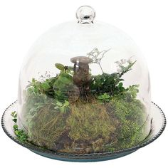 Bell Jar Terrarium III ($80) ❤ liked on Polyvore featuring home, home decor, plants, fillers, decor, flowers, home accessories, bell jar and succulent terrarium