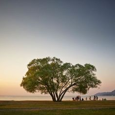 Capturing The Broccoli Tree For 2 Years By Patrik Svedberg