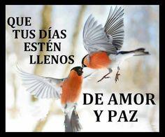 Mejores 94 Imagenes De Amor Paz Tolerancia Y Libertad En Pinterest