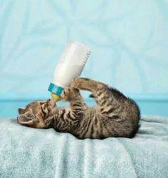Kitten..