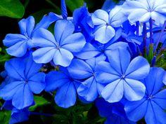 Blue, Blew & Bleu
