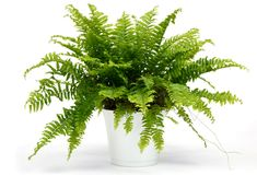 5 Most Simple Tricks: Artificial Plants Watches artificial flowers how to make.Artificial Garden Indoor Green artificial plants balcony home. Plante Zz, Houseplants Safe For Cats, Shower Plant, Popular House Plants, Indoor Plants, Garden Plants, Indoor Flowers, Potted Plants, Air Cleaning Plants