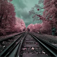Infrared Landscapes With Trees of Gold and Silver