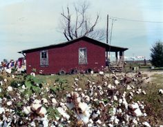 Dad took this pic so Mom could paint it for him....years ago.  MS Delta and cotton.