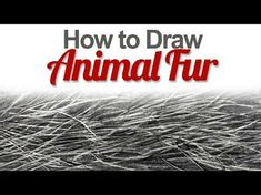 Drawing tutorial - How to draw realistic fur in graphite Leontine van vliet - YouTube