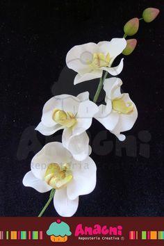 Bara de orquídeas phalaenopsis de azúcar