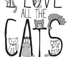 Fotos da linha do tempo - Gatomia - A revista do gato brasileiro | via Facebook
