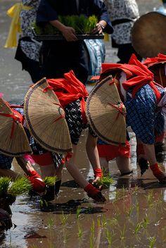 Hanadaue Event of Mibu (rice planting event), Intangible Cultural Heritage, Kitahiroshima, Hiroshima, Japan