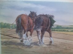 Working shires