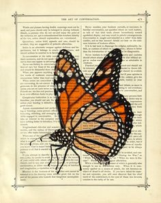 Butterfly Monarch Insect - Vintage Victorian Book Page Art Print Steampunk. $9.90, via Etsy.