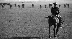 Faenas  de campo Spain Culture, Conquistador, Western Cowboy, Horse Riding, Dressage, Equestrian, Mustang, Animals, Baroque