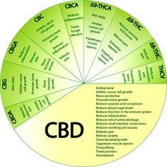 CBD chart.  No medical marijuana allowance in your state?  No problem!  Highest potency CBD rich hemp oil available, AND legal in all 50 states: www.hempsoul.net. #hemp #cbd #cbd oil