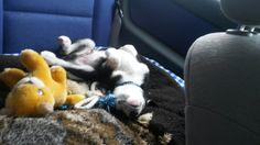 Autofahren macht müde