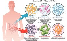 Probiotics 101: Everything You Need to Know (Literally)