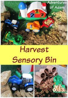Day 30 - Cereal sensory bin Harvest Sensory Bin | http://adventuresofadam.co.uk/harvest-sensory-bin/