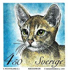 sweden, abyssinian, cat, feline, house cat, scandinavia, postage stamp, philately, vintage, ephemera, breed, postage, cat art