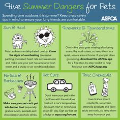 Learn about summer pet safety and the top dangers for dogs and cats. Enter to win a great summer prize pack for pets and their people from ASPCA. Cat Care Tips, Dog Care, Pet Tips, Summer Safety Tips, 1. Tag, Dog Safety, Love Your Pet, Pet Safe, Pet Health